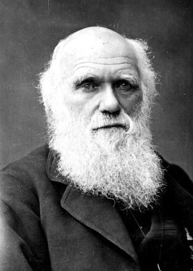 darwin científico británico sentó bases teoría moderna evolución concepto desarr