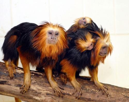 Listado de animales: mamíferos