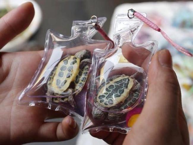 Polémica por venta de animales vivos como llaveros en China